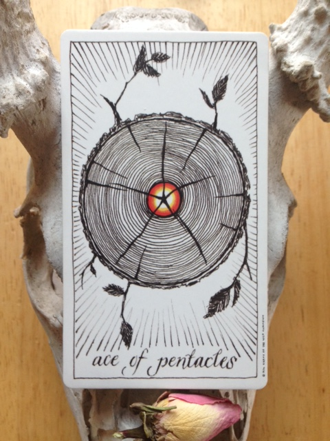 Ace of Pentacles- Open to Possibility – Margot Darling